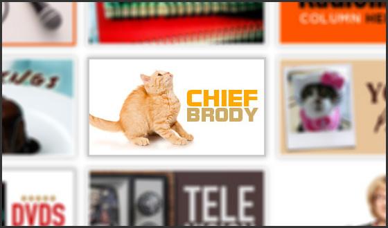 Sarah Millican's Kitten Chief Brody